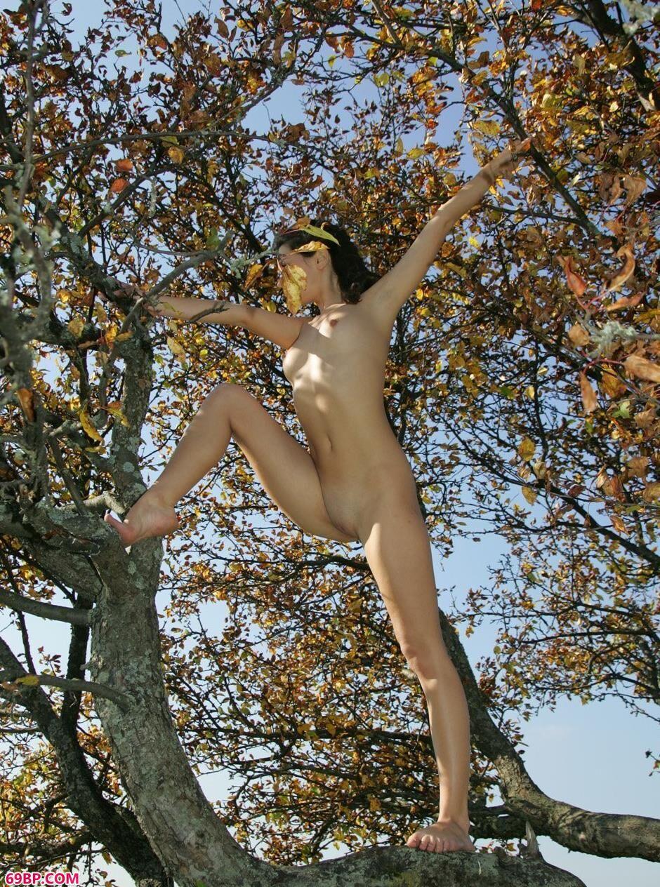 美模Dasha树上的大尺度人体
